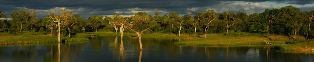 Afrique du Sud - Sabi Sand - Cr�dit photo : Jean-Philippe Baude et Genevi�ve Routier