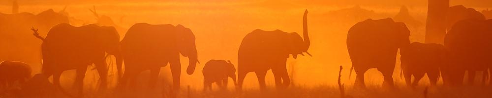 Zimbabwe - El�phants - Cr�dit photo : Vincent Beccaro
